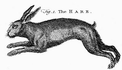 hare-graphicsfairy006bw